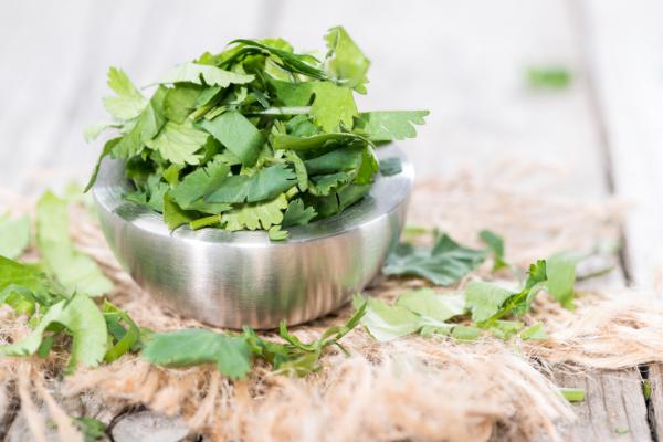 health benefits of herbs- cilantro
