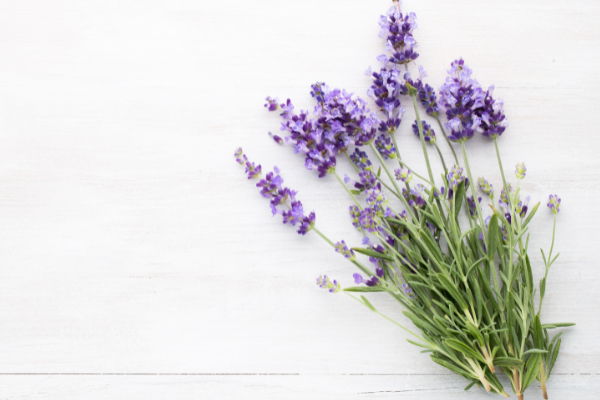 health benefits of herbs- lavender